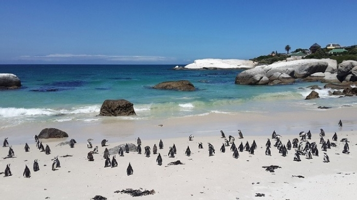 gallery/5-reasons-to-visit-simons-town-in-cape-town
